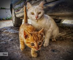 curious cats by gallogiancarlo on 500px