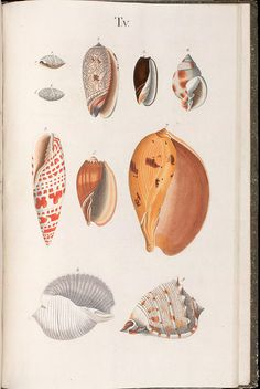 n130_w1150 by BioDivLibrary, via Flickr