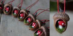 acorns6