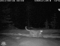 Banff National Park Wildlife Cam