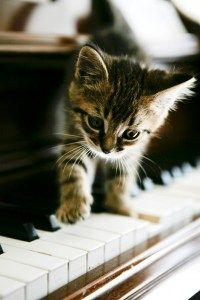 Baby kitten is ready for his piano lesson :)
