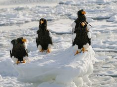 Four Of A Kind by Harry  Eggens on 500px