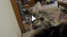 """Dieses Kätzchen ist wirklich besonders. Statt einem normalen """"Miau"""" kommt aus ihrer süßen Schnute ein Geräusch, das man eigentlich nur von Schafen kennt."""