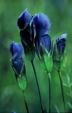 Extraña flor azul