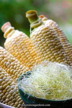 When shucking corn this summer, save your corn silk, as it is valuable medicine. It is one of my favorite allies for the urinary tract with its soothing, cooling, diuretic and anti-inflammatory properties. Homeopathic Remedies, Health Remedies, Home Remedies, Healing Herbs, Medicinal Plants, Natural Medicine, Herbal Medicine, Natural Cures, Natural Healing