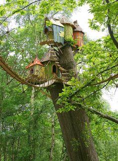 lintujen puumajat