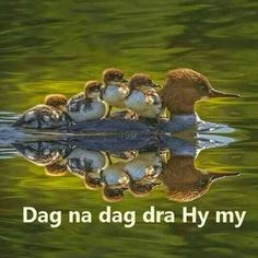 Animals And Pets, Cute Animals, Spiritual Images, Goeie More, Afrikaans Quotes, Writing A Book, Good Morning, Bible Verses, Things To Think About