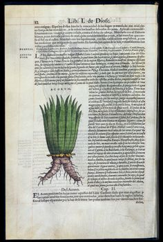 """De Materia Medica"" by Dioscorides — Viewer — World Digital Library"