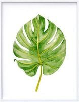 Going Green: Botanicals on Display