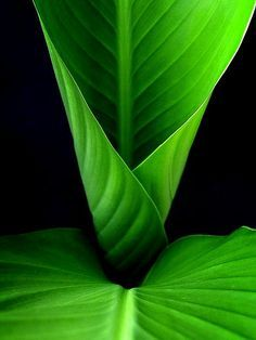Green Leaves on Black Background World Of Color, Color Of Life, Go Green, Green Colors, Pretty Green, Kelly Green, Colours, Planta Vascular, Green Leaves
