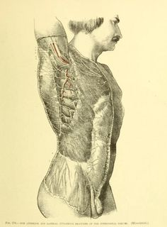 Fig. 176. The anterior and lateral cutaneous branches of the intercostal nerves. Tablets of anatomy : dissectional and scientific. 1898.