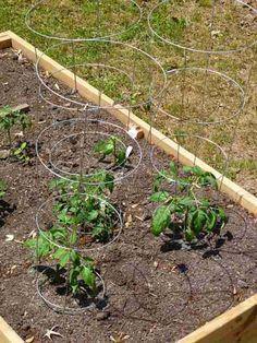 tuteur pour tomate en forme de cage