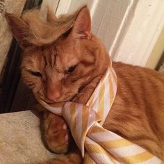 Donald Trump's signature tie is an excellent touch for this cat. Right?