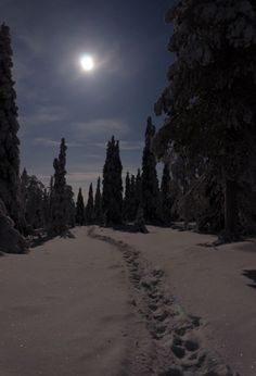 Great shot of moonlight at Riisitunturi by Mika Kaivola