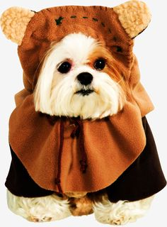 Star Wars Pet Ewok Costume #HalloweenCostumes2016