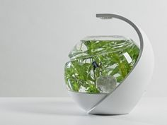 Avo is a unique self-cleaning fish tank. It requires no filter cleaning or water changes making fish keeping simple and beautiful.