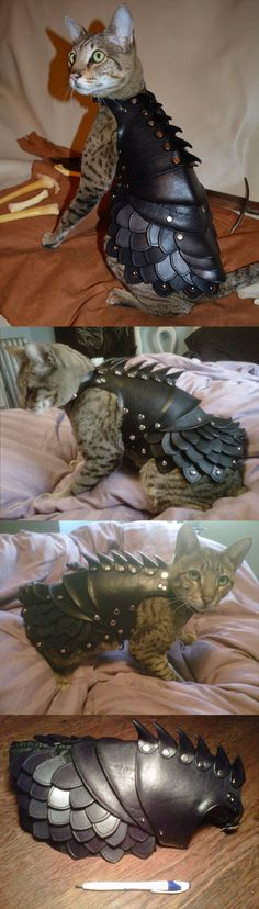 Not a fan of pet clothes.  But if you're going to dress your pet, this is the way to go.  Cat leather armor…
