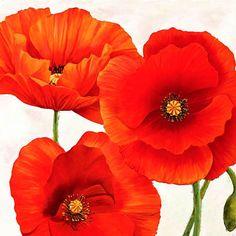 Luca Villa: Poppies I Keilrahmen-Bild Leinwand Mohn Blumen rot