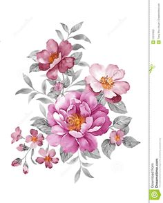 watercolor-illustration-flower-set-simple-white-background-51531902.jpg (1043×1300)
