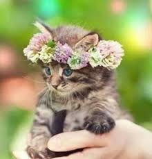 Image result for kitten flower crown