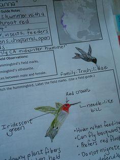 Annas Hummingbird Notebook Page by HarmonyArtMom, via Flickr