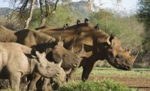save-the-rhino-trust-team -