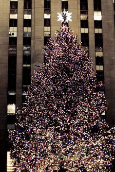 ny christmas tree