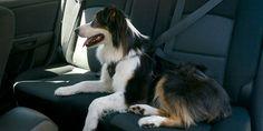 Clickit Utility 3-Point Dog Safety Harness from Sleepypod - Dog Milk