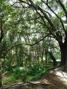 Meddard Park,  Valrico Florida