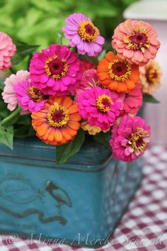 Colorful zinnias in a blue tin box :: floral centerpiece