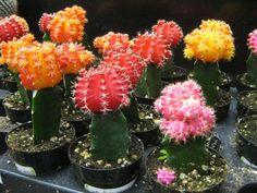 Cuidar un cactus es... ¡facilísimo!
