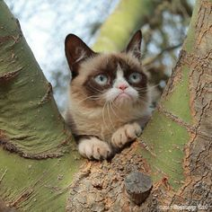 Grumpy cat, joke, funny, smile, love