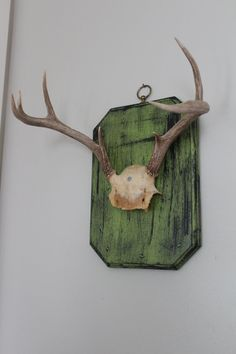 SOLD Mounted Deer Antlers Makes a Perfect Hook to by SouthernREbelle, $75.00
