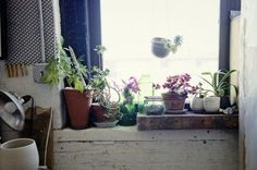 Love gardening, but short on outdoor space?  Below you'll find some inspiration for planting indoors — all you need is a window.