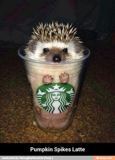 Pumpkin spikes latte - ❤️ hedgehogs