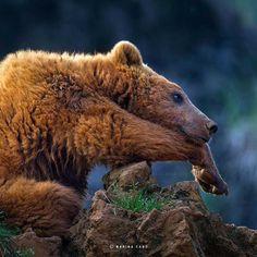 animal-wildlife-photography-marina-cano-2