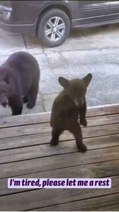 Baby Animals Super Cute, Cute Wild Animals, Baby Animals Pictures, Cute Animal Videos, Cute Little Animals, Cute Animal Pictures, Cute Funny Animals, Animals Beautiful, Animals And Pets