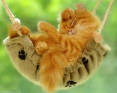 Swinging kitten.