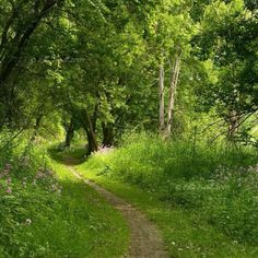 I want walking trails through our woods