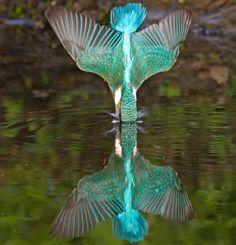 photo humour insolite oiseau tête eau
