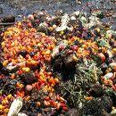 Cuando la comida se convierte en basura: al año se desperdician 1.300 millones de toneladas de alimentos en el mundo ecoagricultor.com