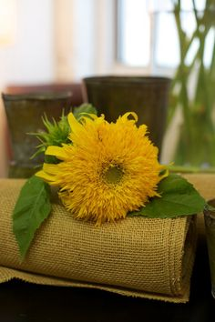 This teddy bear sunflower picture just makes me want to cuddle it, rather than slow-motion eat it like I did with my bouquet at Swanson's wedding. Happy Flowers, Pretty Flowers, Yellow Flowers, Flora Flowers, We Are Golden, Sunflower Pictures, Sunflower Design, Sunflower Fields, Flower Power