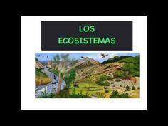 Actividad 1. Vídeo Explicativo sobre qué son los ecosistemas, sus componentes y los tipos que hay.