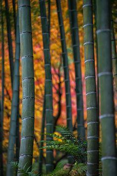 Bamboo Colors Arashiyama Kyoto by jleephoto