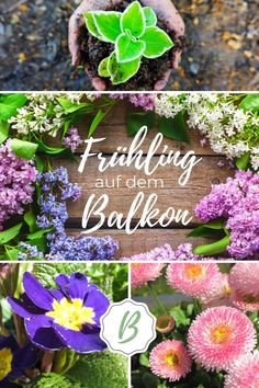 Plant spring flowers for balcony design in spring! The colorful early bloomers bring spring-like mood to your balcony. Read more about 5 spring flowers that also tolerate light frost! Makeup Looks For Brown Eyes, Summer Makeup Looks, Spring Fairy, Tree Fern, Balcony Design, Balcony Ideas, Balcony Plants, Grow Your Own Food, Flower Boxes