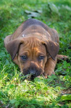 Cute puppy by Sleep Pics / 500px