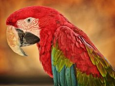 2017-03-12 - red and green macaw pic: Full HD Pictures, #1922112