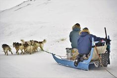 Picture of a passing dog sled in Ilulissat in the Arctic Circle