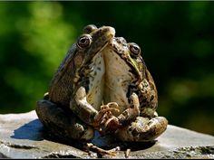 (50) Одноклассники Whites Tree Frog, Funny Animals, Cute Animals, Animal Hugs, Best Pet Insurance, Call My Dad, Cute Animal Photos, Tree Frogs, Animal Quotes