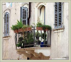 Istria, Brtonigla: balcony plants